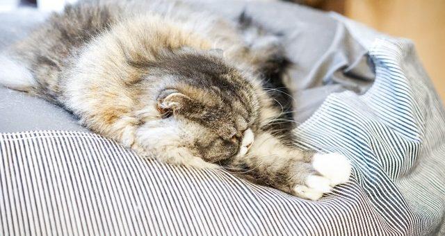 冬場の理想的な睡眠環境